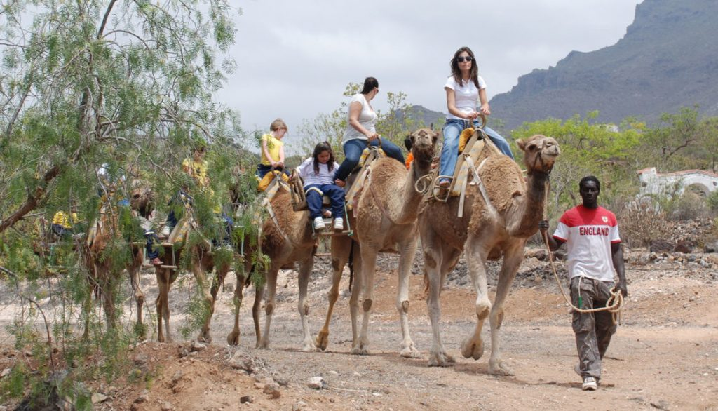 The 3 best theme parks in Tenerife