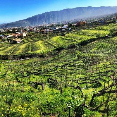 3 Bodegas Para Visitar En Tenerife